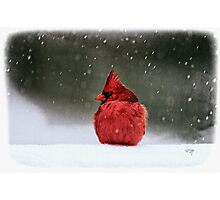 A Ruby In The Snow Photographic Print