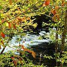 Autumn Stream by Asoka