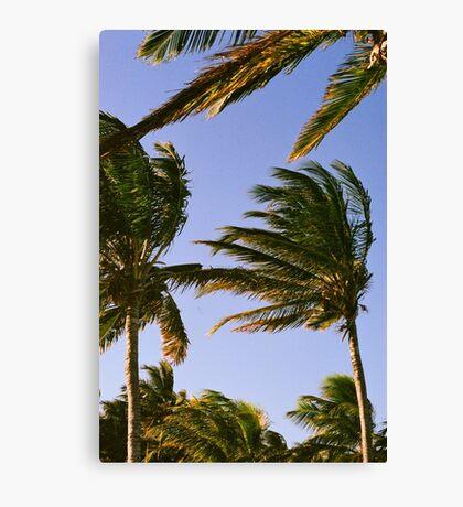 Palm Trees.  Canvas Print