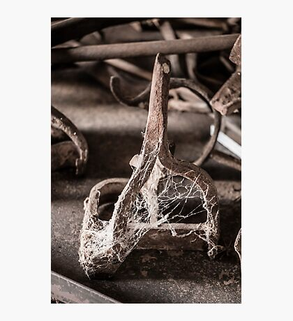 Gathering Dust Photographic Print