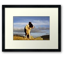 Border Collie Heaven: The Chronicles of Indy Framed Print