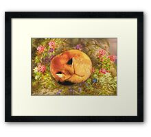 The Cozy Fox Framed Print