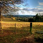 Late Afternoon, Looking Towards St Boswells by Christine Smith