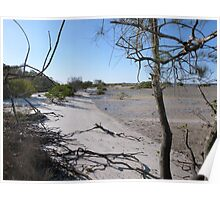 A Walk along the Mudflats. Tin Can Bay. Queensland. Poster