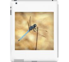 Scarce Chaser Dragonfly by Jacqui Davey iPad Case/Skin