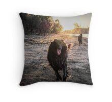 2015 Groenendaels at lakeside Throw Pillow