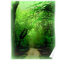 Misty Morning in the Forest Poster