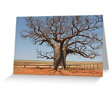 Boab by the Marsh Derby Greeting Card