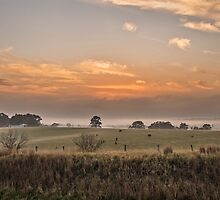 Pokolbin NSW by Allport Photography