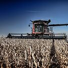 Soybean Harvest by Steve Baird