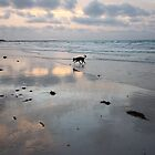 Dog Playing in the Surf by Jennifer Heseltine