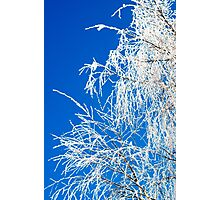 The branches of the tree during the winter Photographic Print