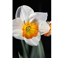 Daffodil Dressed in White Photographic Print