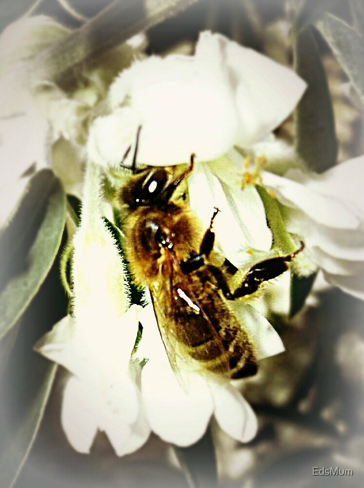 Flower all to itself - Greedy Bee - 2013 by EdsMum