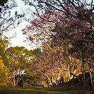 Jacaranda lane by Philip Alexander
