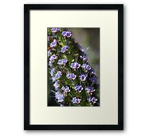 Pride of Madeira Framed Print