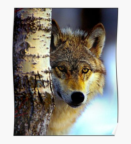 TIMBER WOLF; Vintage Wilderness Print Poster