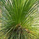 The grasstree by Philip Alexander