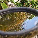 Birdbath reflections by Philip Alexander