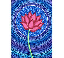 Splendid Calm Lotus Flower Photographic Print