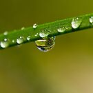 Water droplets by Philip Alexander