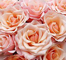 Peach Roses by AnnDixon