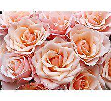 Peach Roses Photographic Print