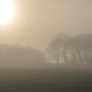 """"""" Sun, Mist And Trees """" by Richard Couchman"""