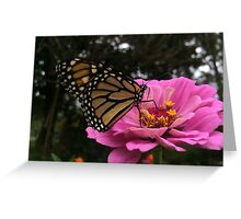 Monarch Butterfly Pollinating Purple Passion Zinnia Greeting Card