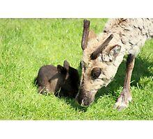 New Born Reindeer for Santa Photographic Print