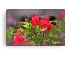 Bumble Bee Bum ~ Canvas Print