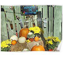 Autumn on Display Poster