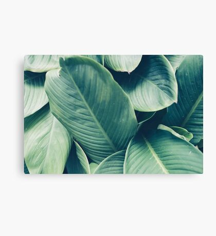 NATURE - GREEN - LEAVES - VEGETATION Canvas Print