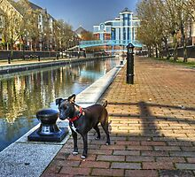 The Manchester Terrier..Small Dog,Big City. by Jamie  Green