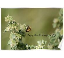 Bee-Enjoy the little things in life Poster