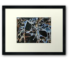 Insect Graveyard Framed Print
