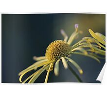 Yellow petals and a dome of gold Poster