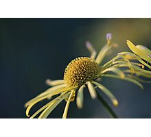 Yellow petals and a dome of gold Photographic Print