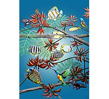 Fish, Feather & Flame Tree Flowers Photographic Print