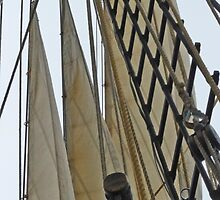 All About Sailing by phil decocco