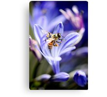 From Every Opening Flower Canvas Print