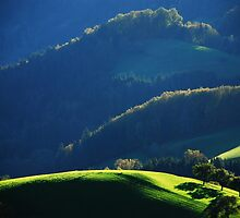 Magical Light...........The three Trees on the Grass Field..... by Imi Koetz