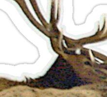 Bull elk resting Sticker