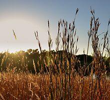 Sun Flare over Grassland by heartlandphoto