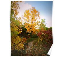 Autumn Trail Poster