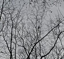 Dark Skies by nikkifdb