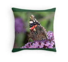 Red Admiral butterfly at rest Throw Pillow