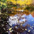 Reflections in Johnson Pond by Lisa Cook