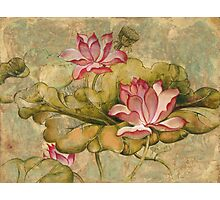 The Lotus Family Photographic Print
