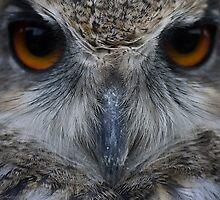 Scowl by Matt West